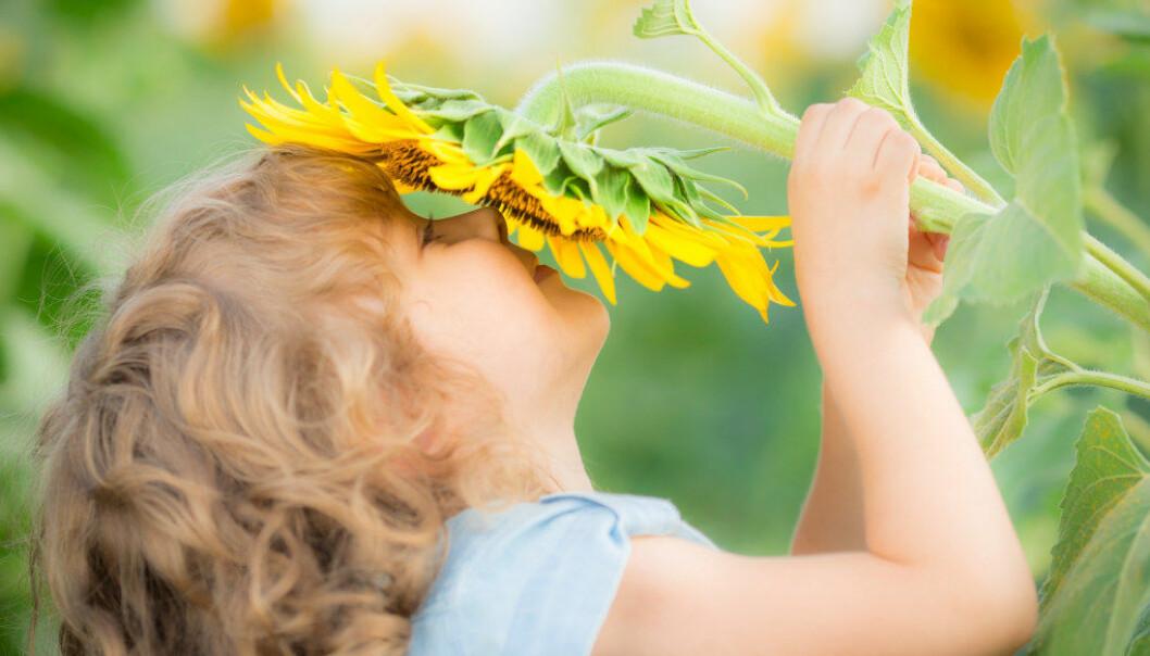 Sensitive barn reagerer på en stresset hverdag, for høye forventninger og manglende mulighet til å trekke seg tilbake. Klarer vi i barnehagen å senke tempoet, ha flere pauser og rolige stunder er det ikke bare en fordel for sensitive barn, men for alle barna. Foto: Fotolia.com