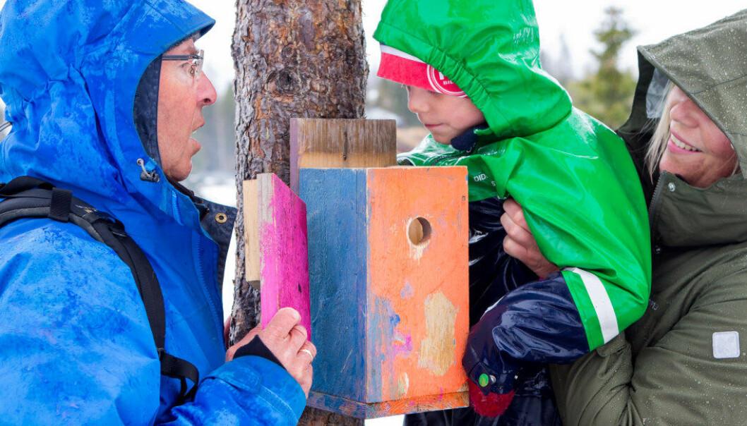 Den pensjonerte naturfaglæreren Karl August Haslestad stortrives på tur sammen med barnehagebarna og daglig leder Line Elisabeth Dalseng i Birkebeineren friluftsbarnehage på Lillehammer. Henrik David Stange (5) er spent på om noen har flyttet inn i fuglekassa. Foto: Charlotte Wiig