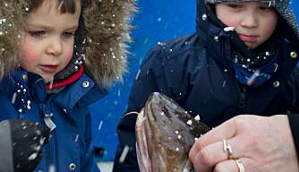 Barnehagebarna er på kaia hver dag under Lofotfisket
