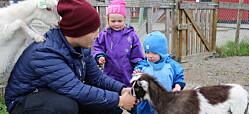 Ungene i denne barnehagen har fjøsvakt, plukker poteter og ser sauer blir slakta