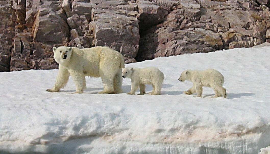 Bestanden av ville dyr, fugler, insekter, fisk og amfibier blitt redusert med 50 prosent på kun 40 år, skriver artikkelforfatterne. Foto: Wikimedia Commons/Alastair Rae