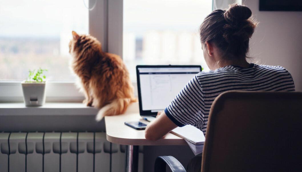 Her er fem tips deg som velger å studere hjemme via internett. Foto: AdobeStock