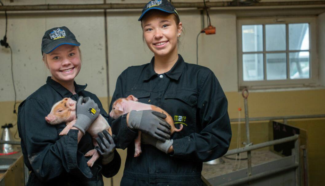 Elevene på Mære landbruksskole er naturlig nok stolte av at skolen kommer svært godt ut når det gjelder grisehold. Her er Trine Gullberg Skogli (t.v.) og Ingrid Værdal med hver sin grisunge. Foto: Håvard Zeiner