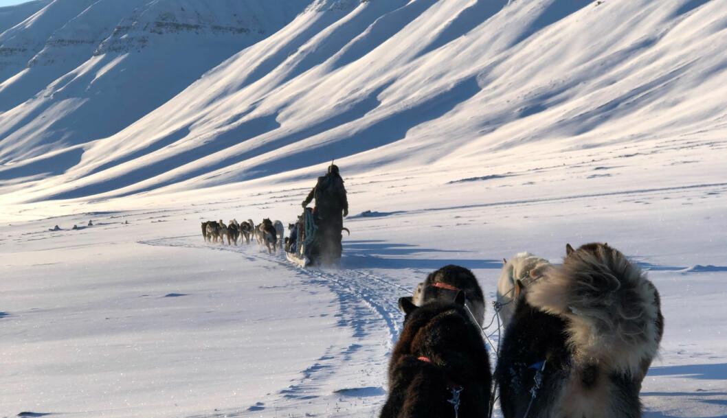 Elevene ved den nye folkehøgskolen på Svalbard vil få leve tett på naturen. Foto: Privat