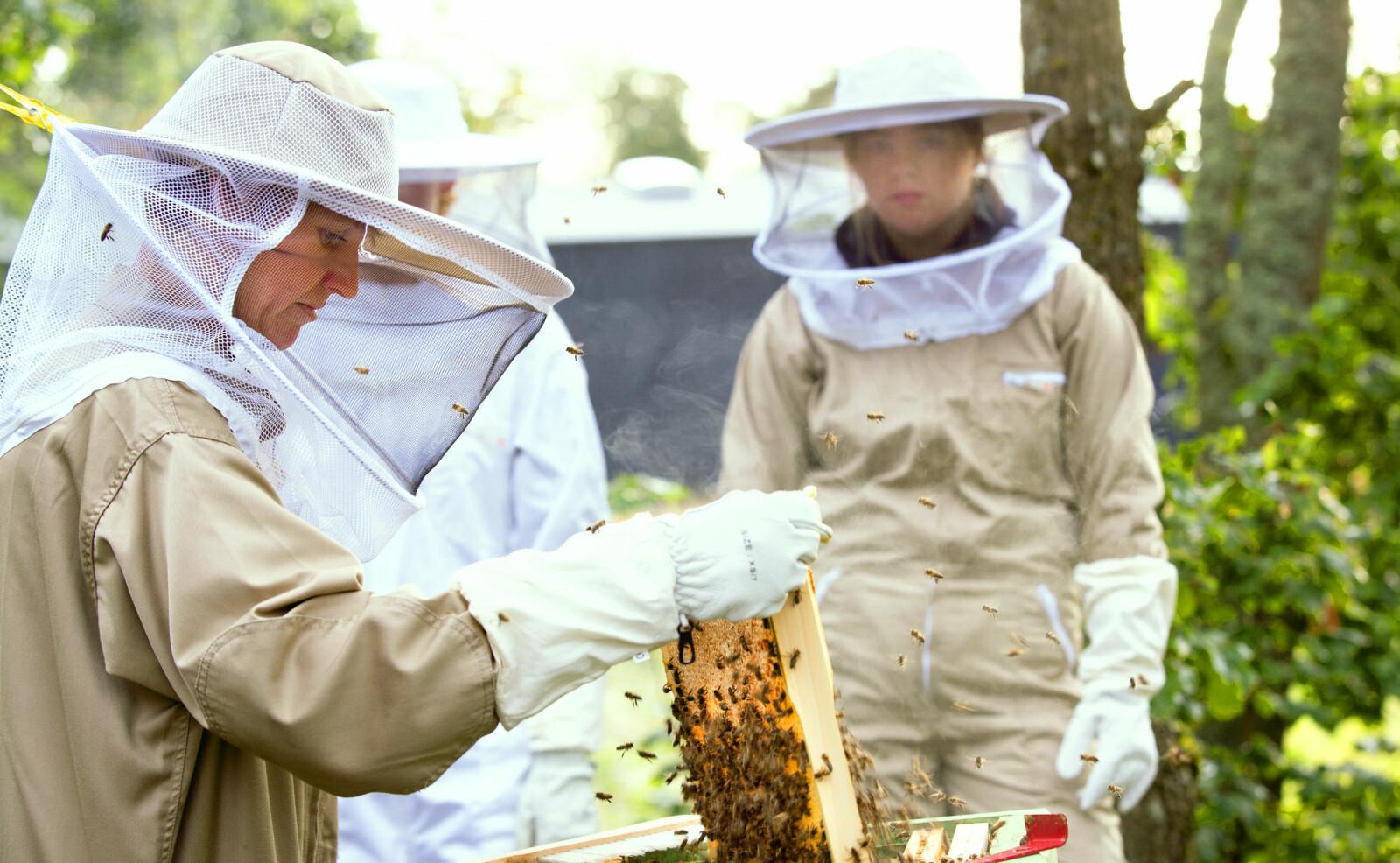 Lærer Helene Haug Pagander drar ut honningtavlene og forteller elevene ved Kalnes videregående om dronningen og dronenes rolle i bikuben.