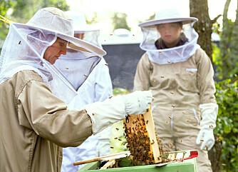 Her er honning og bier en del av hverdagen
