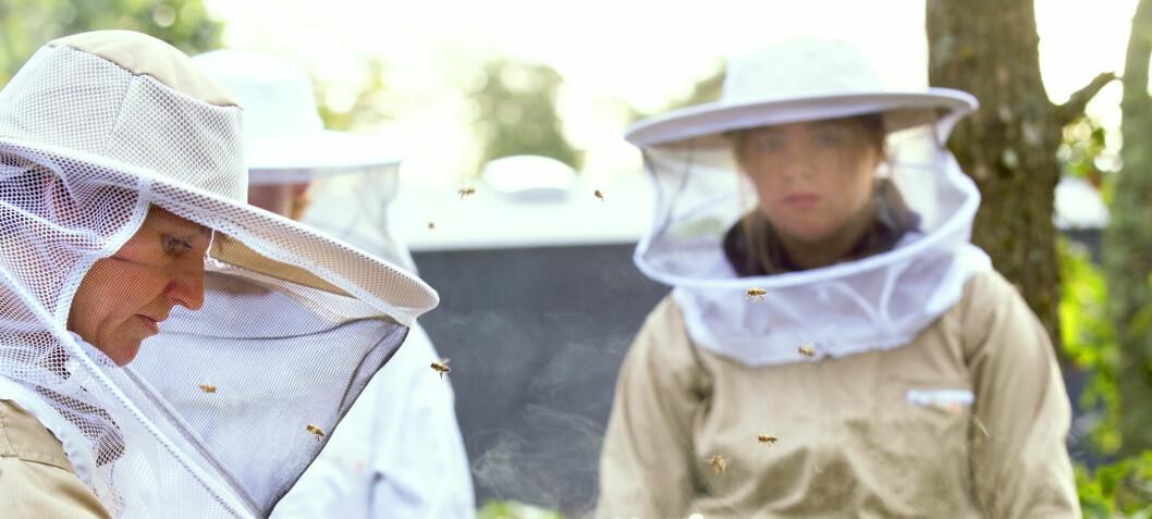 Honning og bier er en del av hverdagen for elevene på Kalnes vgs