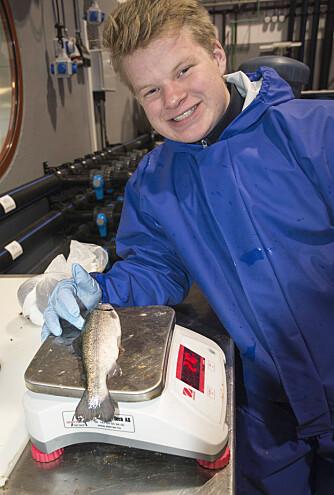 Fisken som skal veies, har fått en lett bedøvelse så den skal ligge rolig. Det er Lars Ulfsnes som gjør jobben.