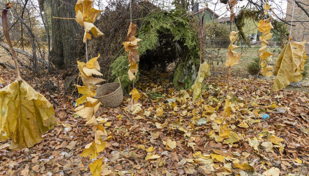 Studentene ønsket å ramme inn en lun hule med en vegg av blader foran.