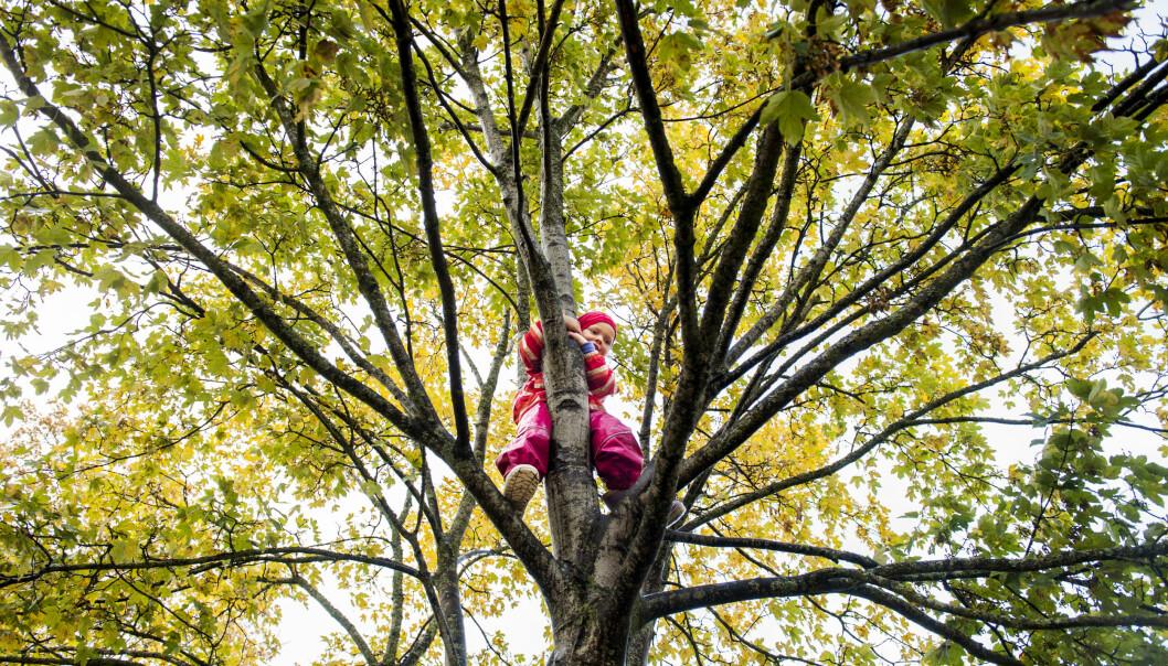 Lina klatrer høyt opp i treet i Sunnland barnehager i Trondheim. Hun hører sjelden at de ansatte sier «nei, det der er farlig», eller «vær forsiktig».
