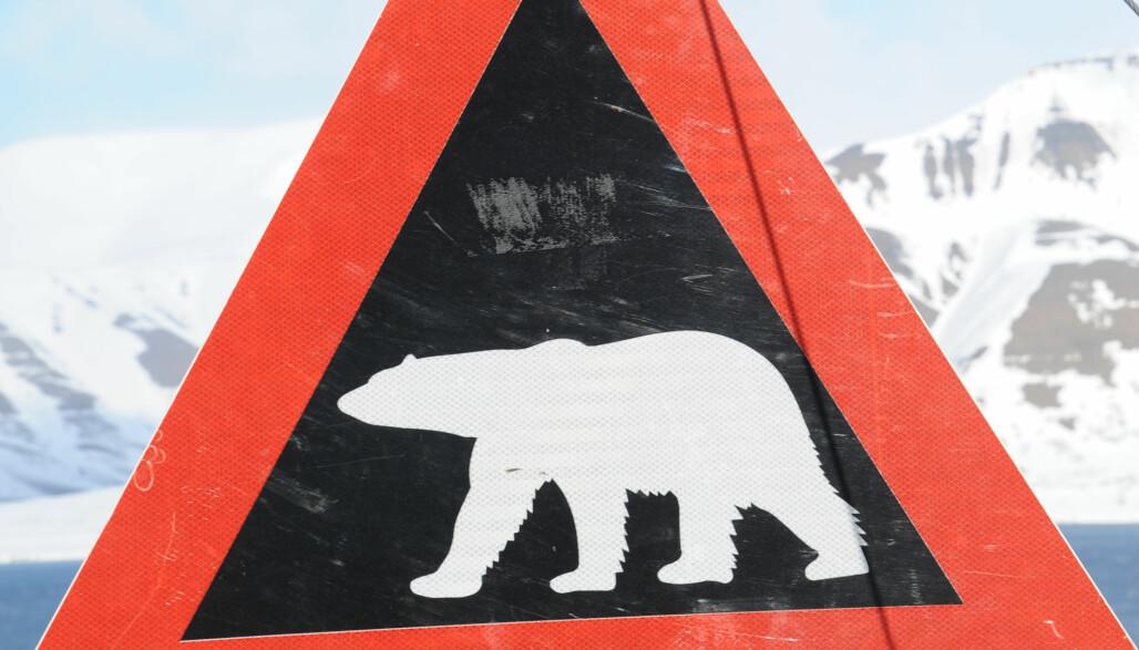 ISBJØRN: Skiltet som viser isbjørnfare, er det første vi ser på vei fra flyplassen i Longyearbyen. Det er bare i bykjernen det er trygt å ferdes uten våpen.