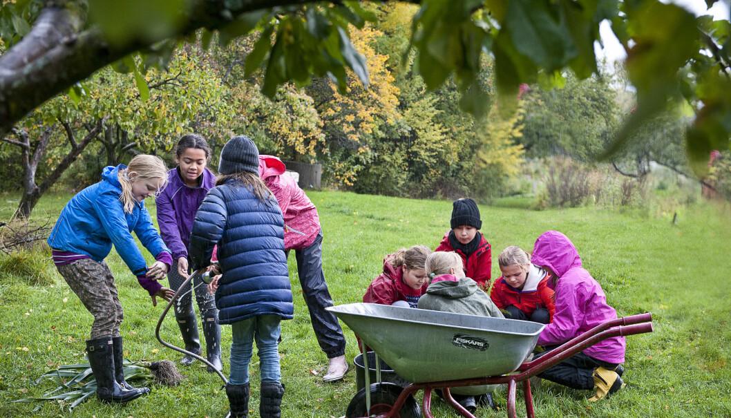 Fagfornyelsen gir skolehagene ny aktualitet, meiner Økologisk Norge.