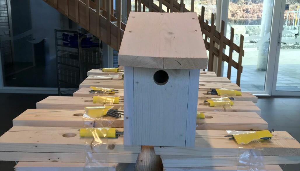 Her kan et fuglekasse-kit hentes. Spiker følger selvfølgelig med.