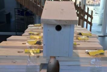 Skolen la fram plank og spiker – nå lager elevene fuglekasser hjemme