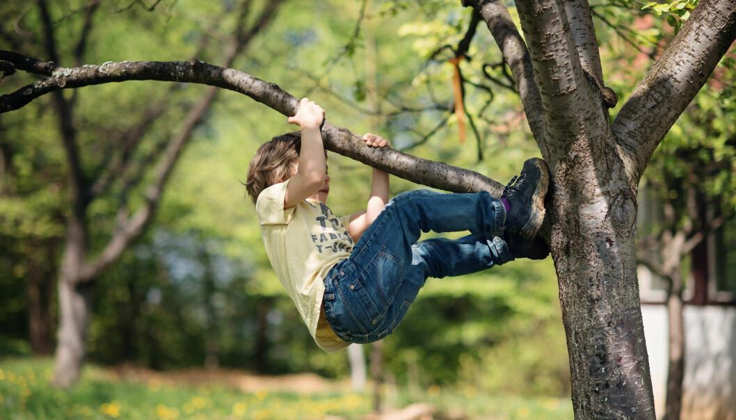 Trivselen er høyere der barna har tilgang på et naturområde i barnehagen, sier forsker Ole Johan Sando ved DMMH.