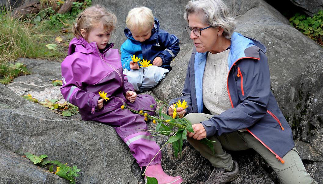 Anniken Aarskog Mortensen (t.v.) og Mikkel Wang Dalen har plukket jordskokkblomster som de vil pynte jettegryta med, og viser dem til naturkunstansvarlig Nina Thomassen i barnehagen.