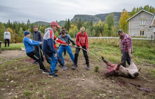Her får 9.-klassingene være med på å slakte gris