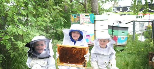 Det startet med en crazy idé. Nå røkter barna 270 000 bier i barnehagen