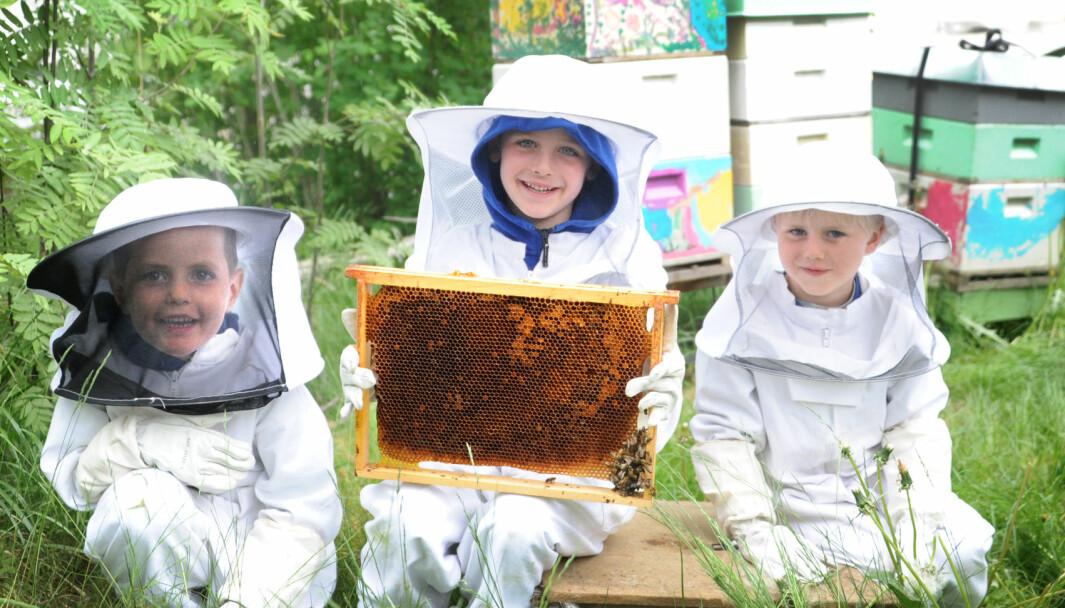 Theo Shetelig (f.v.), Emmet Synnestvedt og Alfred K. Bjorstad i Hareveien barnehage ser ut som små romvesener i birøkterdraktene de må ha på seg når de skal inn til biene.