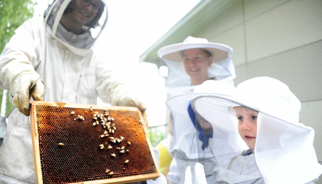 – Det er magisk å være inne hos biene. Det er et yrende liv, men en rolig atmosfære, sier assistent Lill Stormoen som er hos biene sammen med Alfred K. Bjorstad og birøkter Mikkel Dagestad.