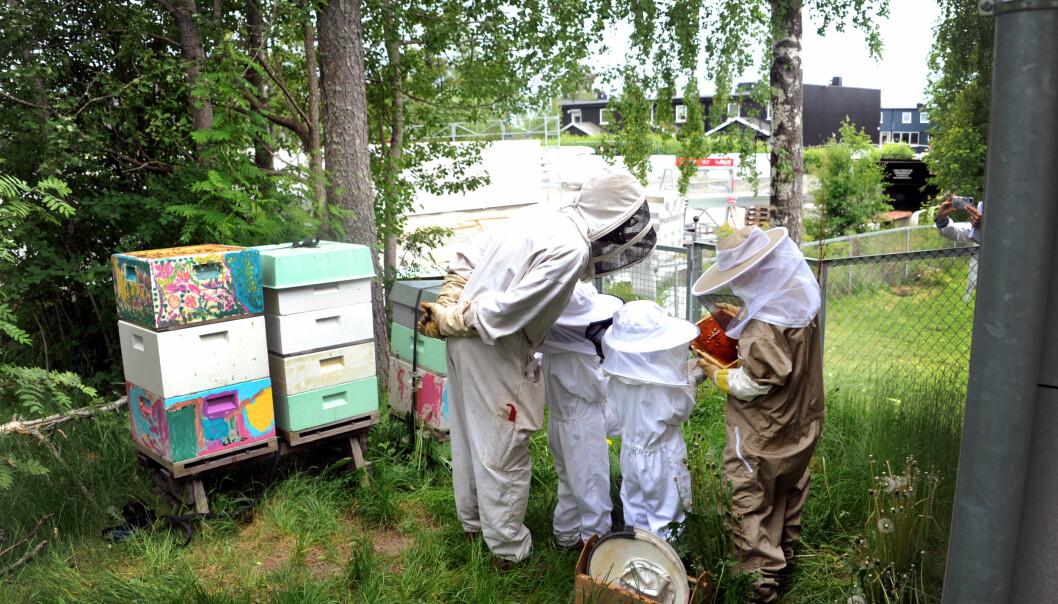 Assistent Lill Stormoen (t.h.) sier barnehagens miljøarbeid fører til at barna lærer hvor honningen kommer fra. Her studerer hun biene sammen med birøkter Mikkel Dagestad.