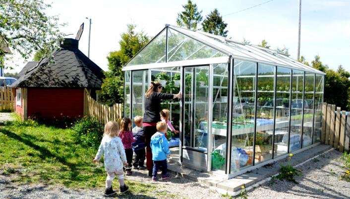 I drivhuset har barne- hagen plantet agurk, chili, tomat og paprika.