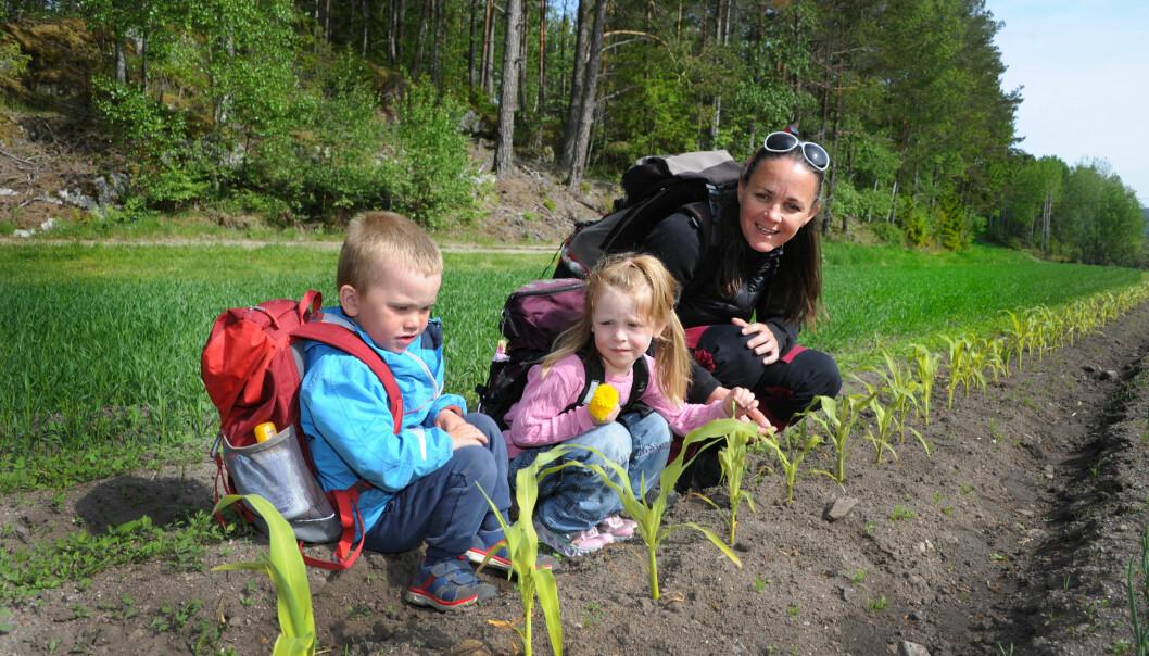 Pedagogisk leder Stine Haugen, Albert Holmskog (4) og Mina Sætaberget (4) sjekker hvordan det går i maisåkeren.