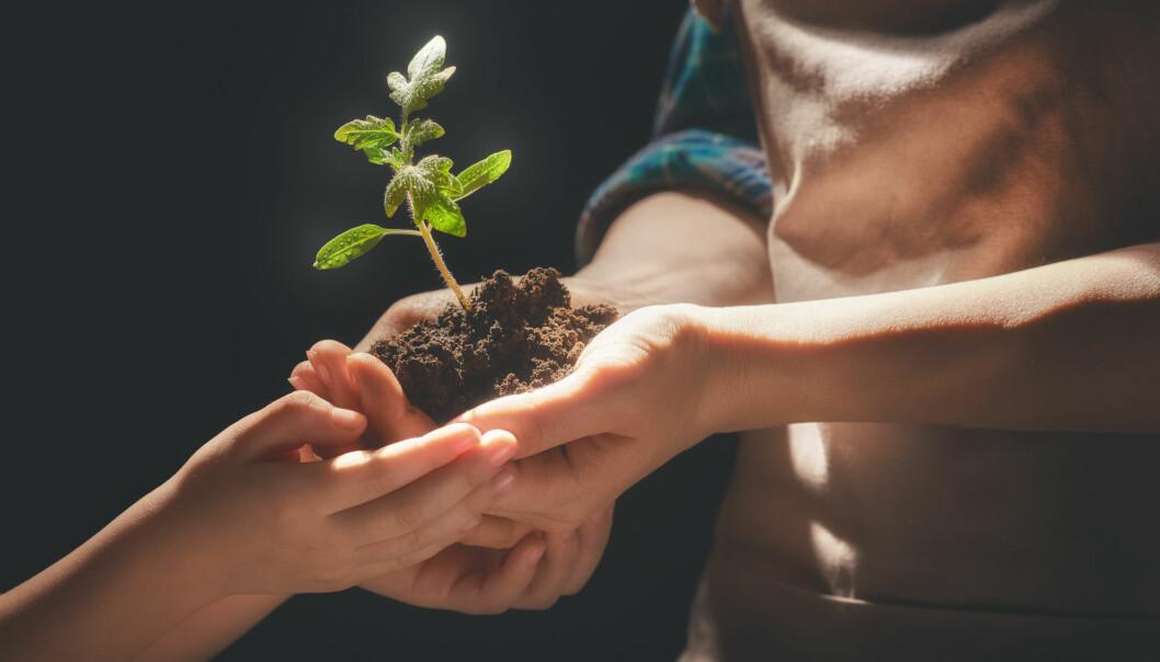 60 prosent av norske barnehageansatte sier de er interessert i hagearbeid, men de får sjelden brukt kunnskapen.