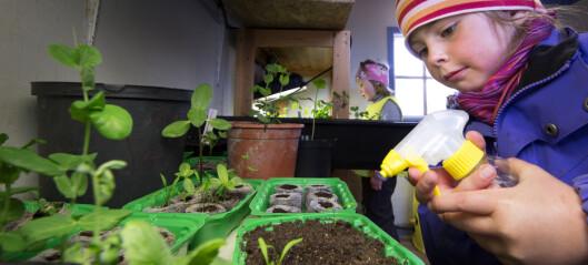 Barn spiser mer grønnsaker om de får være med å dyrke den