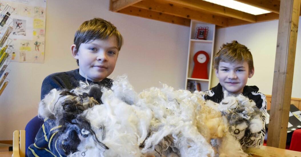 I mer enn ett år arbeidet elevene på 5. til 7. årstrinn med ull som bærekraftig materiale. Vemund Bergo og Elias Bergo viser fram ull fra ulike saueraser.  *** Local Caption *** Skole ble hedret for undring om ull  En av landets minste skoler har flere år på rad vunnet heder og ære og til og med litt penger, i den landsomfattande Nysgjerrigper-konkurransen.