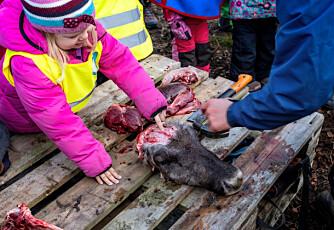 Emma Rose ser reinen bli slaktet i den samiske barnehagen. Ønsket er å styrke den samiske kulturen
