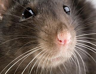 Barnehagebarn lekte med rottegift – fjerner åtekasser fra alle barnehager og skoler